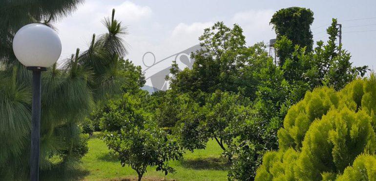فروش باغ ویلا در نوشهر اوکازیون – ۳۶۶۴