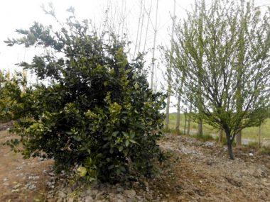 فروش باغ کیوی در آمل ۱۰-۲۹۲