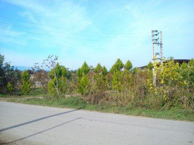 فروش زمین جنگلی در آمل ۱۰-۲۲۰