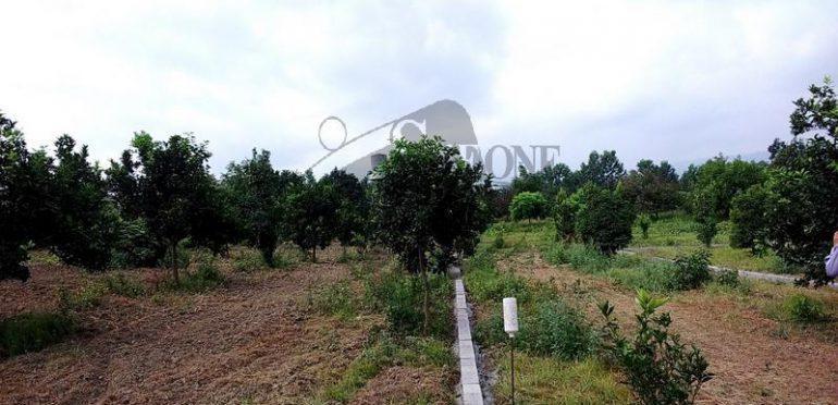 فروش زمین نزدیک جنگل در آمل – ۳۰۴