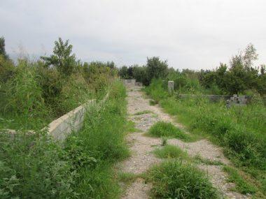 خرید زمین جنگلی در آمل ۱۰-۱۶۶