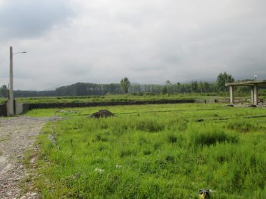 فروش زمین جنگلی در آمل ۱۰-۱۸۶