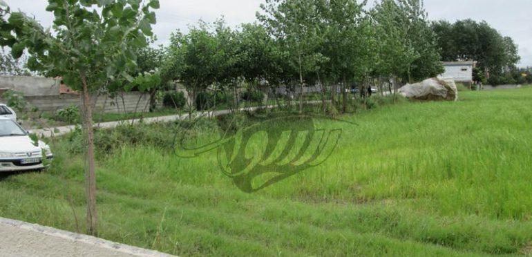 فروش زمین جنگلی در آمل ۱۰-۲۰۱