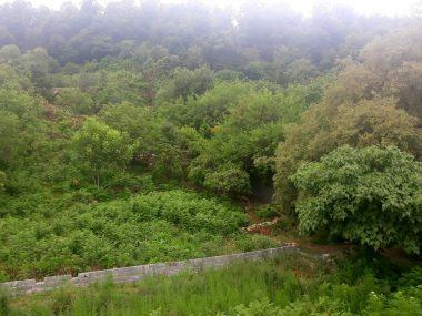 خرید زمین جنگلی در شمال رویان-۱۰۶۲۸
