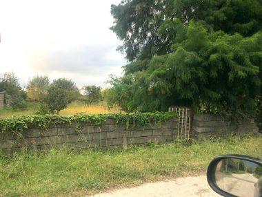 خرید زمین در شمال کلارآباد-۲۱۳۱۵