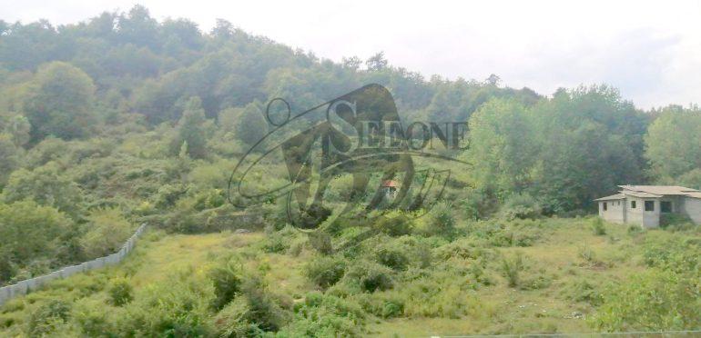 خرید ویلا قواره اول جنگل در شمال رویان-۲۱۸۳۲
