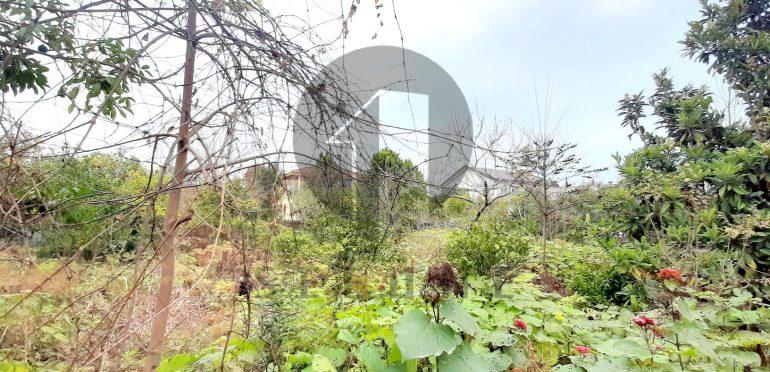 فروش زمین در شمال نوشهر لتینگان-۳۳۷۴۶
