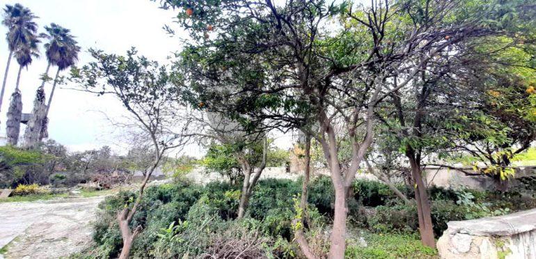فروش زمین شهرکی در شمال نوشهر لتینگان-۳۲۰۳۶
