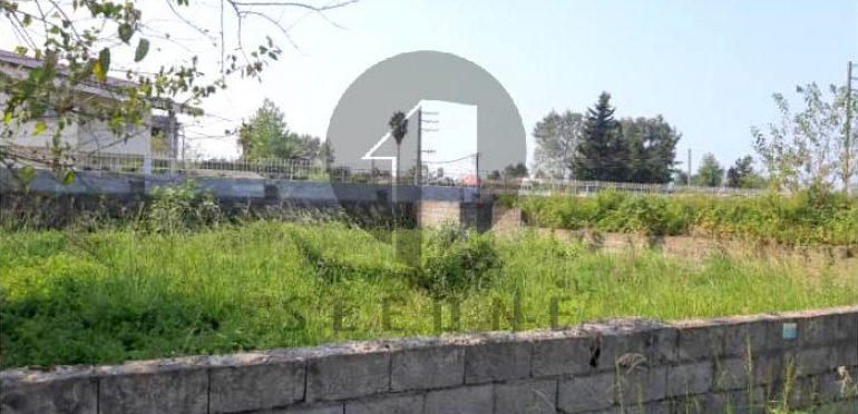خرید زمین در شمال کلارآباد-۳۴۴۲۱