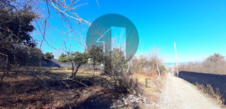 خرید زمین پلاک اول جنگل در شمال نوشهر-۳۹۷۶۹