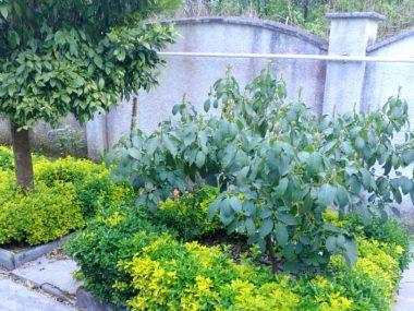 خرید باغ ویلا در شمال کلارآباد-۳۷۴۶۰