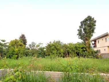 فروش زمین در شمال نوشهر امیررود-۵۰۰۲۹