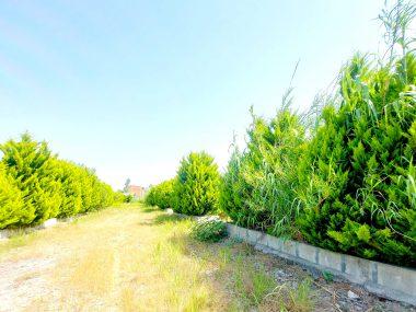 خرید زمین شهرکی در شمال محمودآباد-۵۰۸۴۱