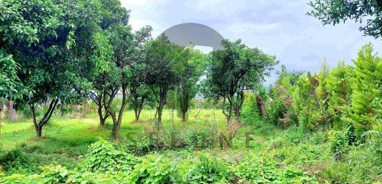 فروش زمین شهرکی در شمال رویان-۵۱۵۴۹