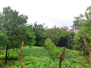 فروش زمین در نوشهر-۵۰۹۶۴