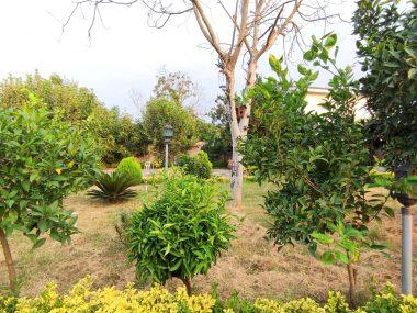 فروش باغ ویلا استخردار در شمال نوشهر-۵۶۰۶۵