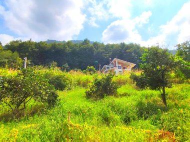 خرید زمین در شمال املاک سیوان-۵۶۷۶۳