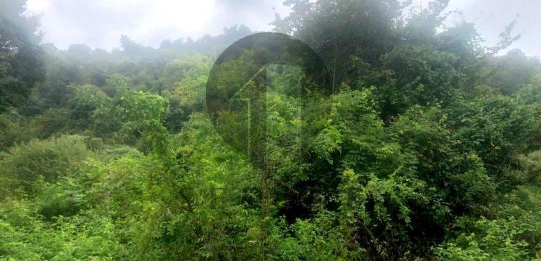 خرید زمین در نوشهر املاک سیوان برند برتر املاک-۵۷۰۷۶