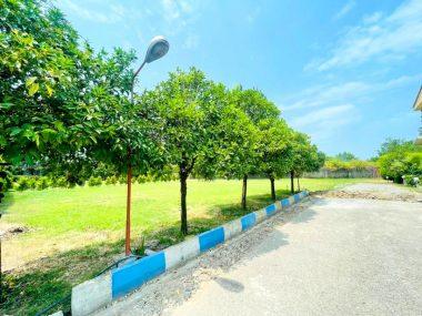 خرید زمین در شمال املاک سیوان-۵۶۶۲۷