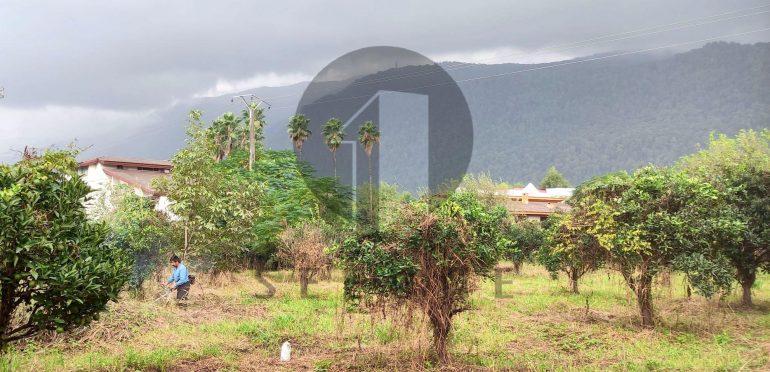 فروش فوری زمین در شمال املاک سیوان-۵۸۰۵۵