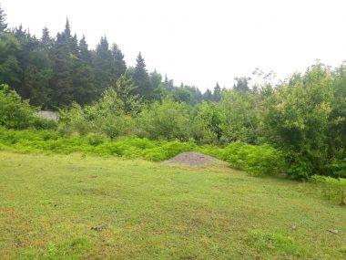 فروش فوری زمین در شمال املاک سیوان-۵۳۸۰۷
